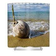 Sprouting Coconut Washed Up On Beach Shower Curtain by Naki Kouyioumtzis