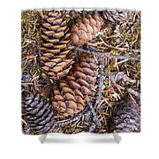 Spruce Cones Shower Curtain