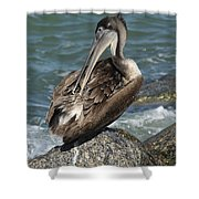 Sprucing Pelican Shower Curtain