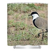 Spur-winged Lapwing Shower Curtain