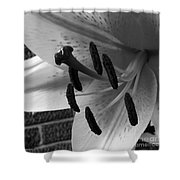 Sq Lily Morning Bw  Shower Curtain