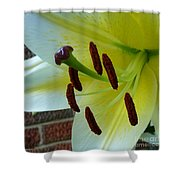 Sq Lily Morning Shower Curtain