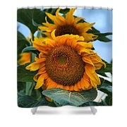 Squamish Sunflower Portrait Shower Curtain