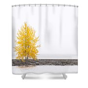 Square Diptych Tree 12-7693 Set 2 Of 2 Shower Curtain