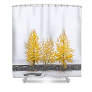 Square Tree Shower Curtain