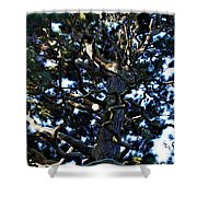 Squiggly Branches Shower Curtain