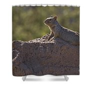 Squirrel   #8424 Shower Curtain