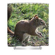 Squirrel And His Sunflower Seed Shower Curtain