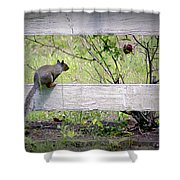 Squirrel And Rosebush Shower Curtain