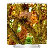 Squirrel Away Acorn Shower Curtain