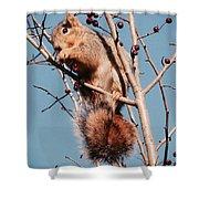 Squirrel Berry Shower Curtain