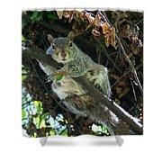 Squirrel By Nest Shower Curtain