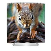 Squirrel Close-up Shower Curtain