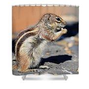 Squirrel Con Queso Shower Curtain