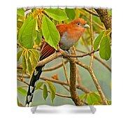 Squirrel Cuckoo In Costa Rica Shower Curtain