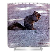Squirrel Eating A Nut Shower Curtain