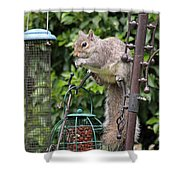 Squirrel Eating Nuts Shower Curtain