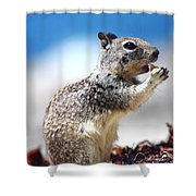 Squirrel Enjoying Lunch On The Beach Shower Curtain