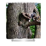 Squirrel Guarding Watering Knot Shower Curtain
