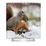 Squirrel In Snow Shower Curtain