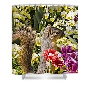 Squirrel In The Botanic Garden-dallas Arboretum V4 Shower Curtain