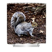Squirrel In The Park-boston  V6 Shower Curtain