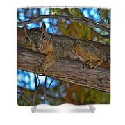 Squirrel Looking Down On Viewer Shower Curtain
