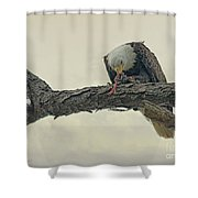 Squirrel Lunch Shower Curtain