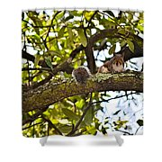 Squirrel On A Branch Shower Curtain