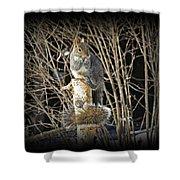 Squirrel On Birch Post Shower Curtain