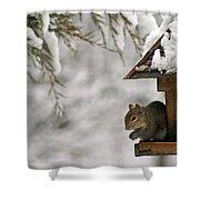 Squirrel On The Bird Feeder Shower Curtain