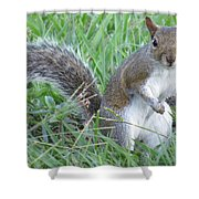Squirrel On The Grass Shower Curtain