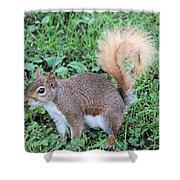 Squirrel On The Ground Shower Curtain