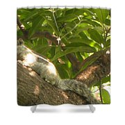 Squirrel On The Tree Shower Curtain