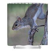 Squirrel Pose Shower Curtain