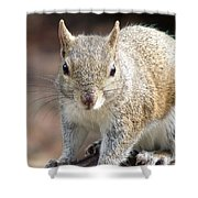 Squirrel Profile Shower Curtain