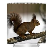Squirrel Profile Shower Curtain