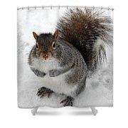 Squirrel Saying Feed Me Please At Niagara Falls Shower Curtain
