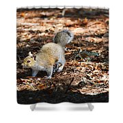 Squirrel Time Shower Curtain