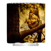 Squirrel With Pear Shower Curtain