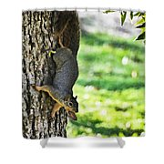 Squirrel With Pecan Shower Curtain