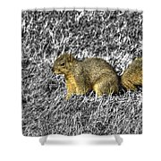 Squirrling Around Looking For Nuts Shower Curtain