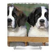 St. Bernard Puppies Shower Curtain