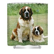 St Bernard With Puppy Shower Curtain