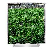 St. Emilion Winery Shower Curtain