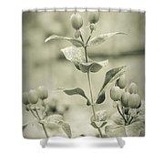 St. John's Wort - Dreamers Garden Series Shower Curtain