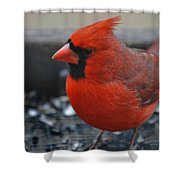 St. Louis Shower Curtain by Skip Willits