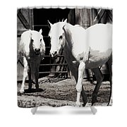 Stable Pair Shower Curtain