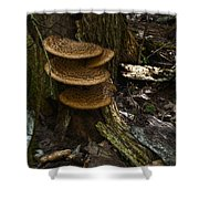 Stack Of Fungi Shower Curtain