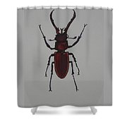 Stag Beetle Shower Curtain